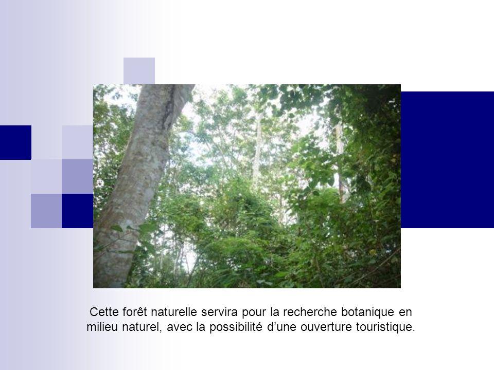 Cette forêt naturelle servira pour la recherche botanique en milieu naturel, avec la possibilité dune ouverture touristique.
