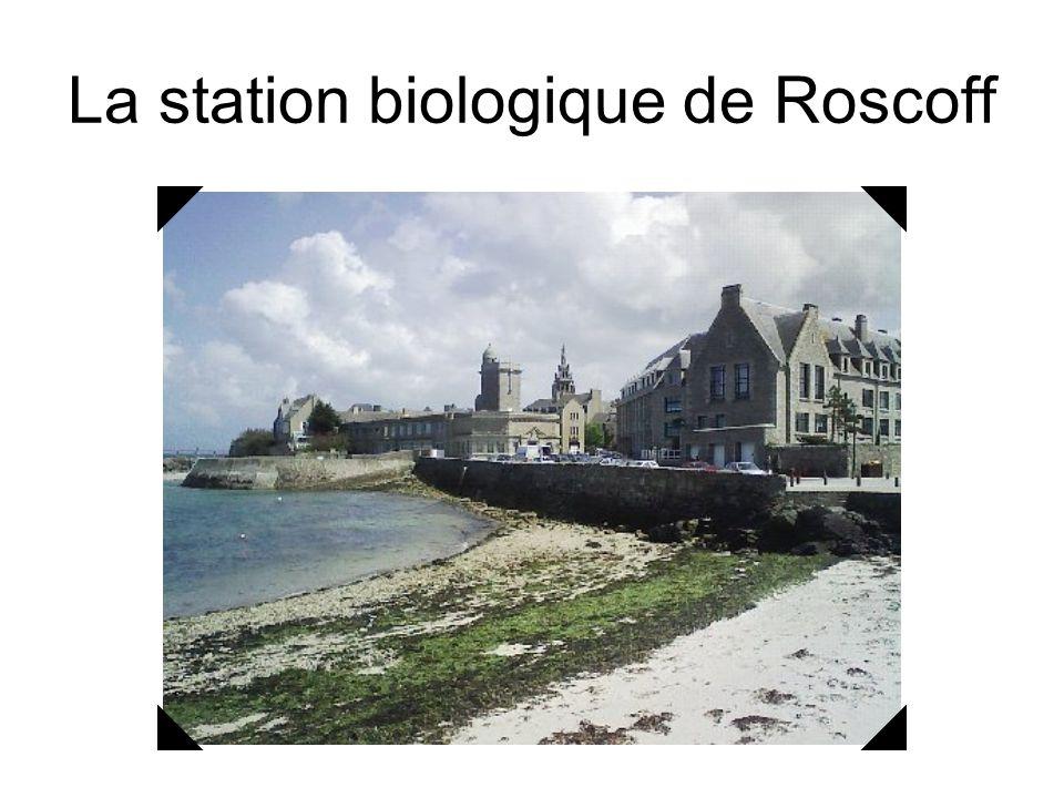 La station biologique de Roscoff