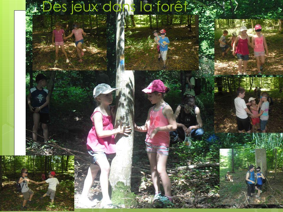 Des jeux dans la forêt