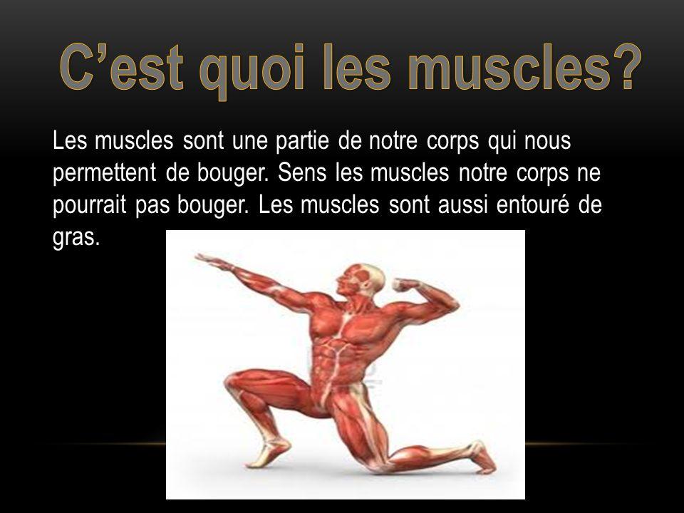 Les muscles sont une partie de notre corps qui nous permettent de bouger.