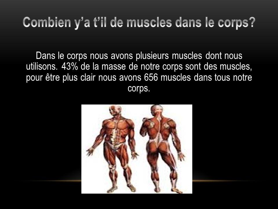 Dans le corps nous avons plusieurs muscles dont nous utilisons.