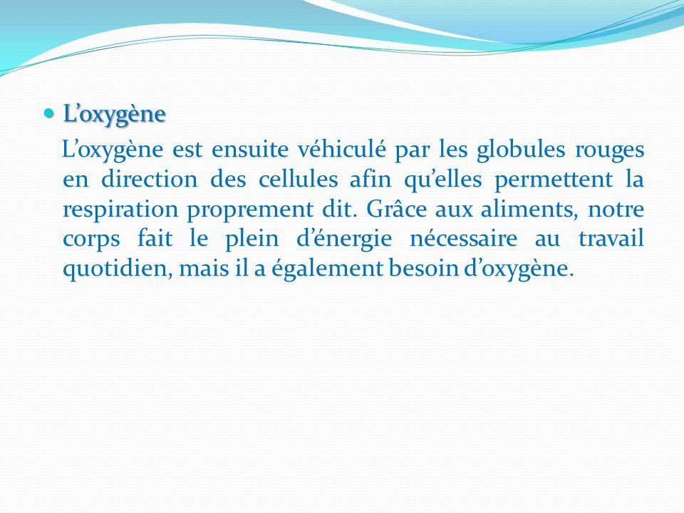 Loxygène Loxygène Loxygène est ensuite véhiculé par les globules rouges en direction des cellules afin quelles permettent la respiration proprement di