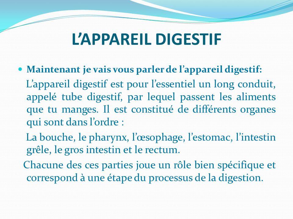 LAPPAREIL DIGESTIF Maintenant je vais vous parler de lappareil digestif: Lappareil digestif est pour lessentiel un long conduit, appelé tube digestif,