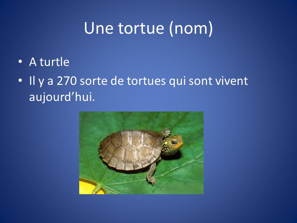 Une tortue (nom) A turtle Il y a 270 sorte de tortues qui sont vivent aujourdhui.