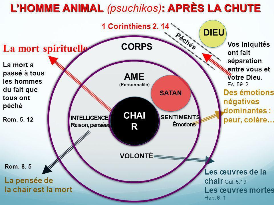 LHOMME ANIMAL : APRÈS LA CHUTE LHOMME ANIMAL (psuchikos): APRÈS LA CHUTE 1 Corinthiens 2. 14 La mort spirituelle Rom. 5. 12 La pensée de la chair est