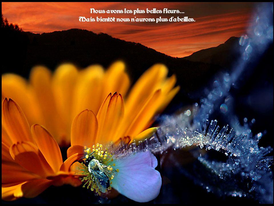 Nous avons les plus belles fleurs… Mais bientôt nous n aurons plus d abeilles.