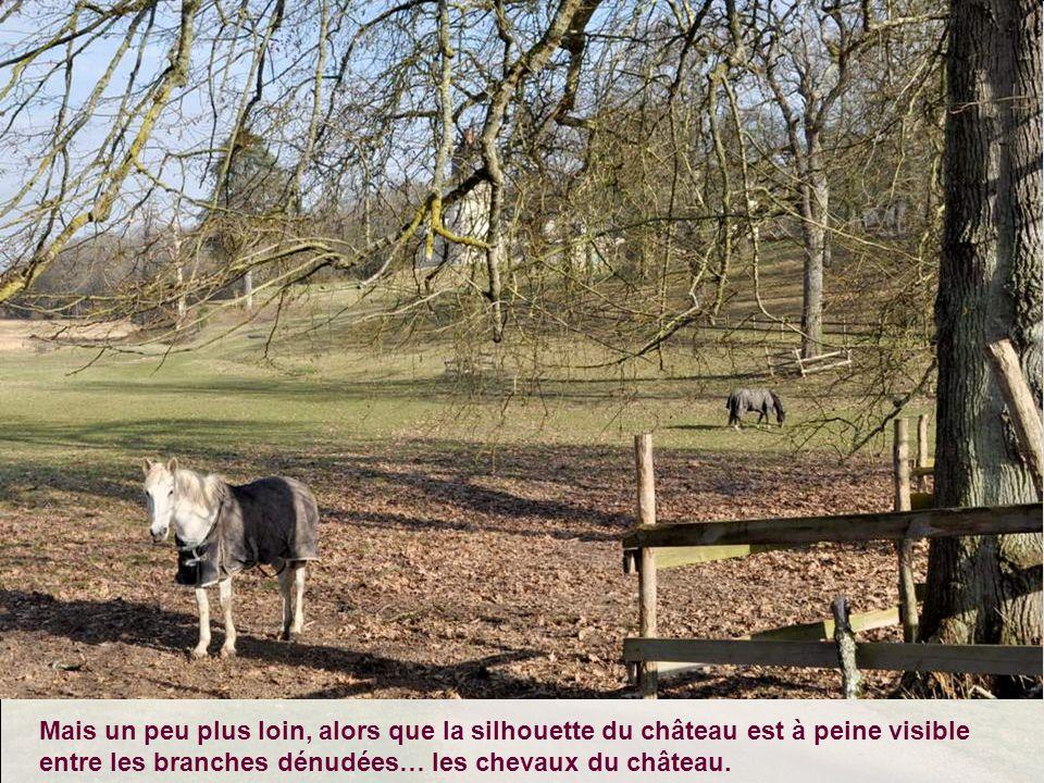 Mais un peu plus loin, alors que la silhouette du château est à peine visible entre les branches dénudées… les chevaux du château.
