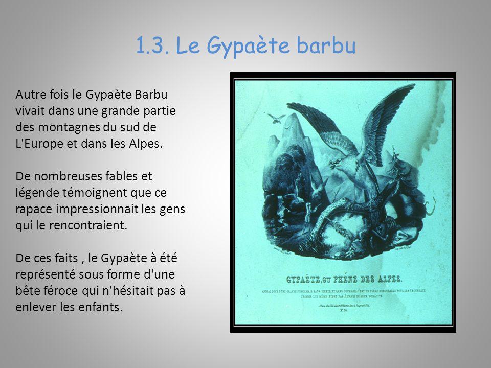 1.3. Le Gypaète barbu Autre fois le Gypaète Barbu vivait dans une grande partie des montagnes du sud de L'Europe et dans les Alpes. De nombreuses fabl