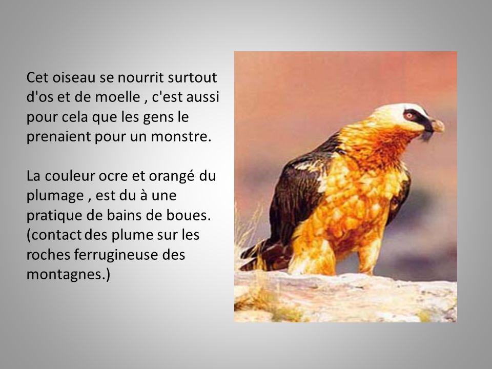 Cet oiseau se nourrit surtout d os et de moelle, c est aussi pour cela que les gens le prenaient pour un monstre.