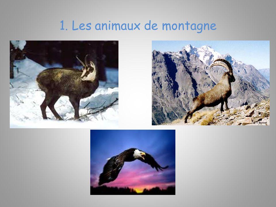 1. Les animaux de montagne