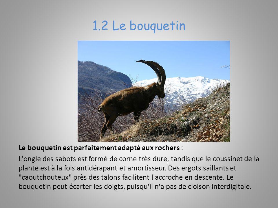 Les empreintes du Bouquetin mesurent 5,5 cm.