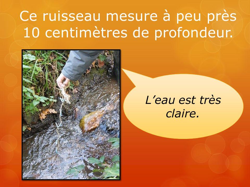 Ce ruisseau mesure à peu près 10 centimètres de profondeur. Leau est très claire.