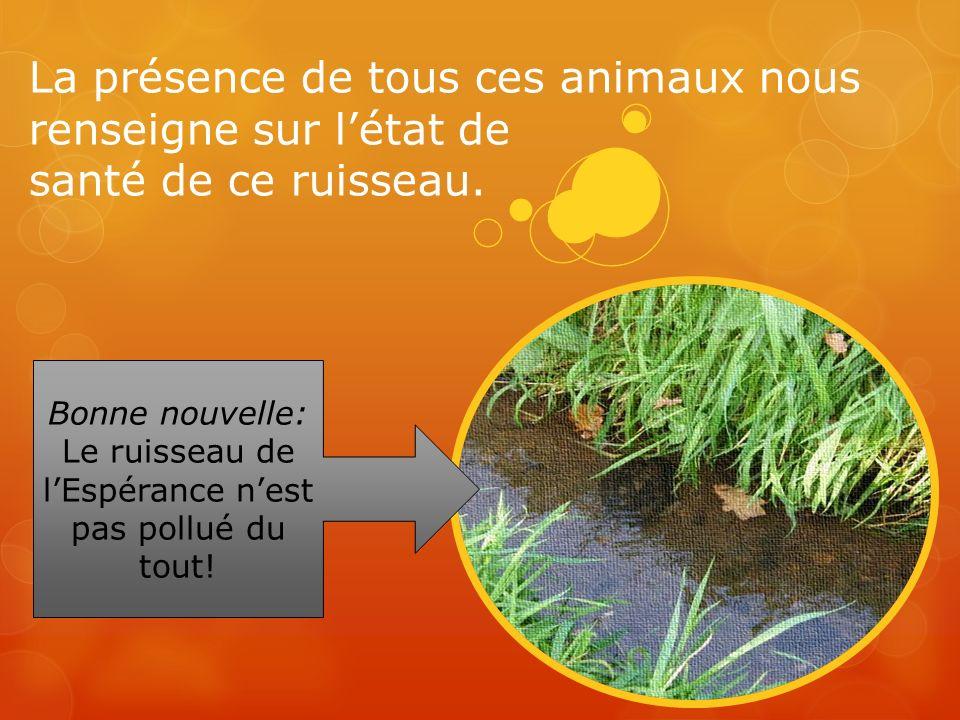 La présence de tous ces animaux nous renseigne sur létat de santé de ce ruisseau. Bonne nouvelle: Le ruisseau de lEspérance nest pas pollué du tout!