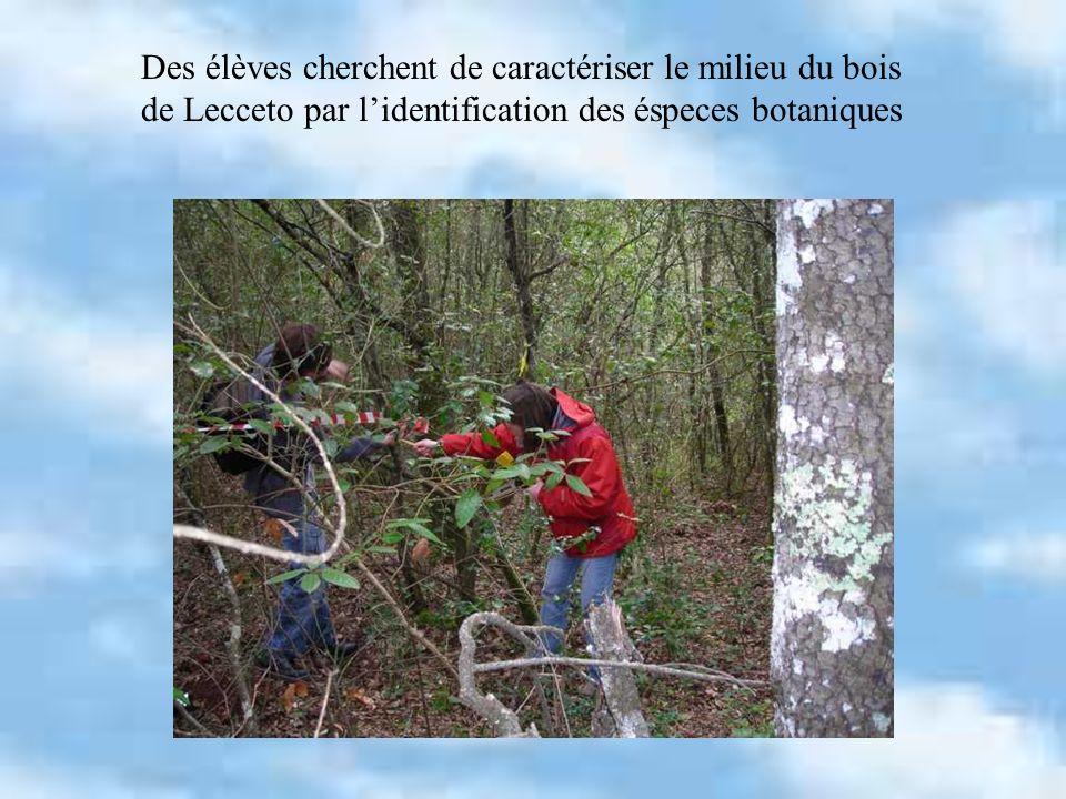Des élèves cherchent de caractériser le milieu du bois de Lecceto par lidentification des éspeces botaniques