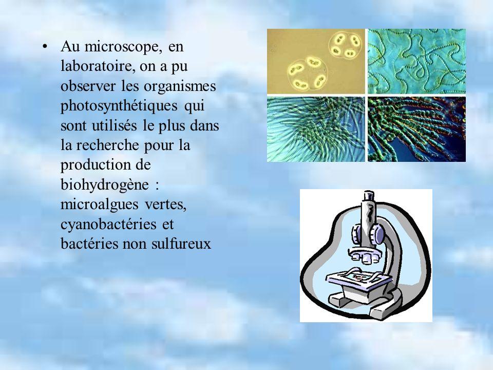 Au microscope, en laboratoire, on a pu observer les organismes photosynthétiques qui sont utilisés le plus dans la recherche pour la production de bio