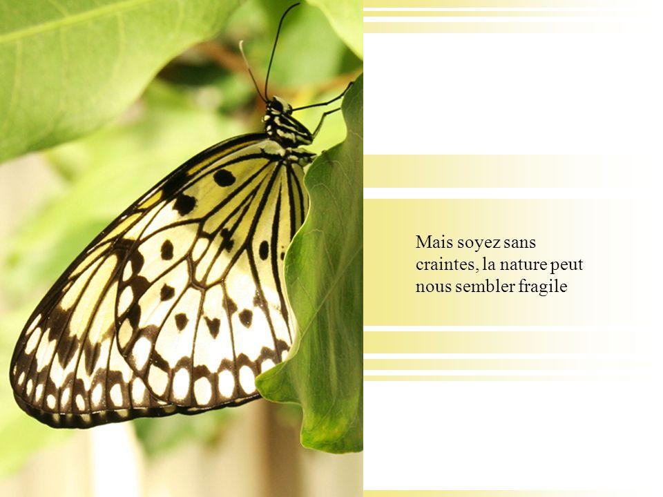 Mais soyez sans craintes, la nature peut nous sembler fragile