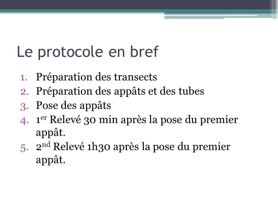 Le protocole en bref 1.Préparation des transects 2.Préparation des appâts et des tubes 3.Pose des appâts 4.1 er Relevé 30 min après la pose du premier