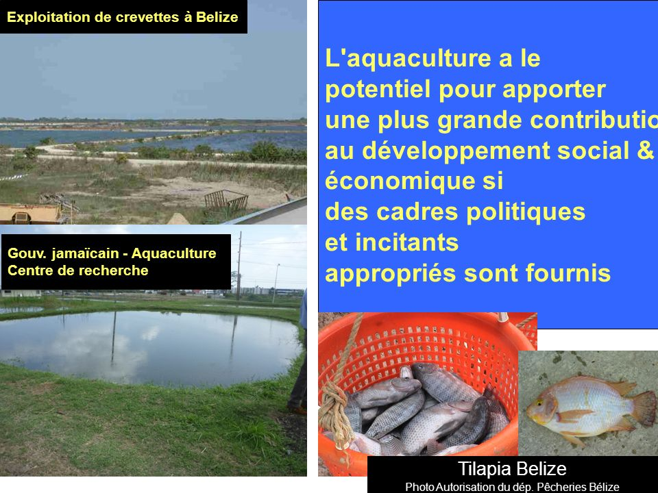 Etat actuel du développement de l aquaculture Pas très développé - Production faible 14 146 Mt par an entre 2000 -2010 Exception de Bélize et de la Jamaïque La production a culminé à 18 879 Mt en 2004 Retombée depuis 2007 à < 10 000 Mt Récente Mousse de mer produite à Antigua.