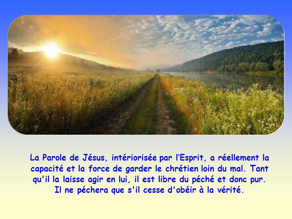 La Parole de Jésus est également comparée à une graine jetée au plus profond du cœur du croyant. Accueillie, elle pénètre dans l'homme et, comme une g