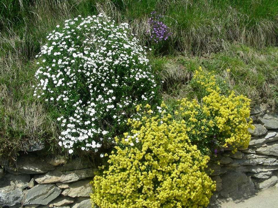 Mai Brouillard de mai, chaleur de juin, Amènent la moisson à point. À la Saint-Didier, soleil orgueilleux, (23 Mai) Nous annonce un été joyeux. Mai,sa