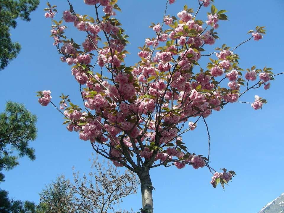 Le printemps sonne à notre porte le 21 mars. Mais cette année cest plutôt en Mai quil sest réveillé. Cest peut être pour ça Quil est si beau ! Regarde