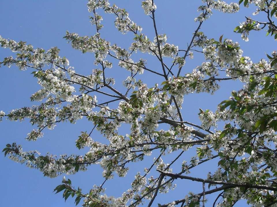 Avril tantôt pleure, tantôt rit. Printemps battant, jardinier courant. Arc-en-ciel du Printemps, année belle. Une pie au Printemps, annonce le mauvais