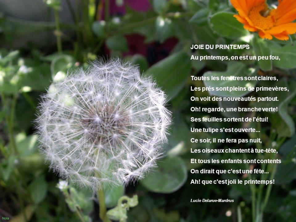 Fleurs de printemps PPS: Nola Avril 2006 Photos: Nola Musique : Runestone mystéries5