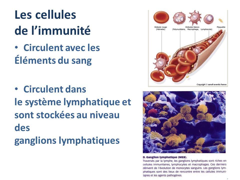 Les cellules de limmunité Circulent avec les Éléments du sang Circulent dans le système lymphatique et sont stockées au niveau des ganglions lymphatiq