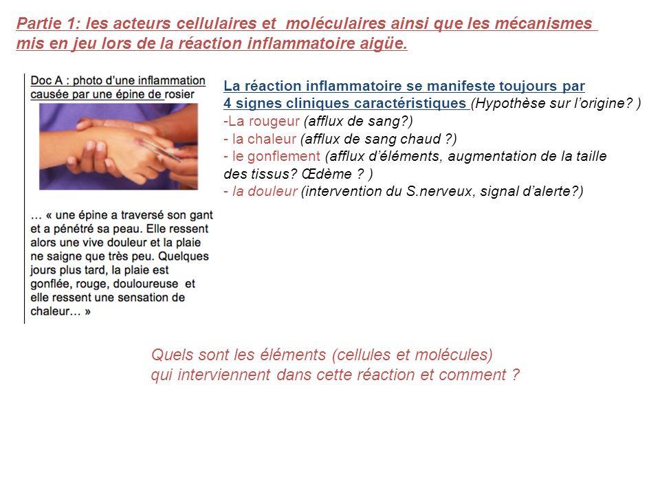 La réaction inflammatoire se manifeste toujours par 4 signes cliniques caractéristiques (Hypothèse sur lorigine? ) -La rougeur (afflux de sang?) - la