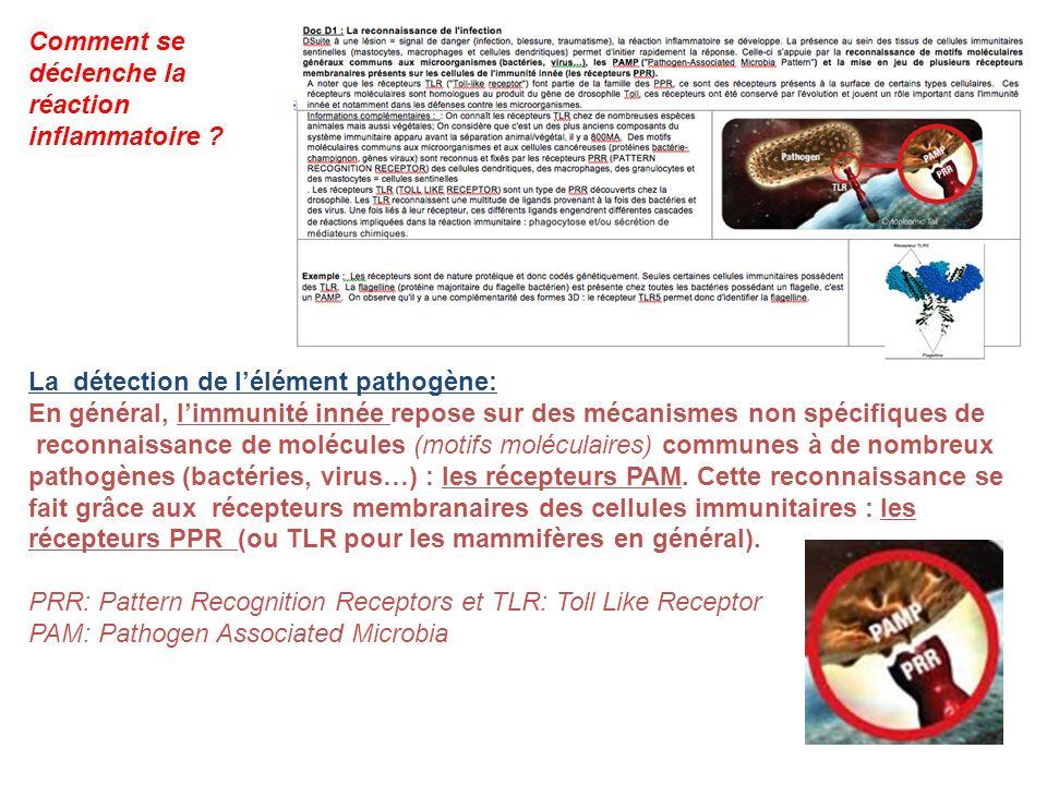 Comment se déclenche la réaction inflammatoire ? La détection de lélément pathogène: En général, limmunité innée repose sur des mécanismes non spécifi