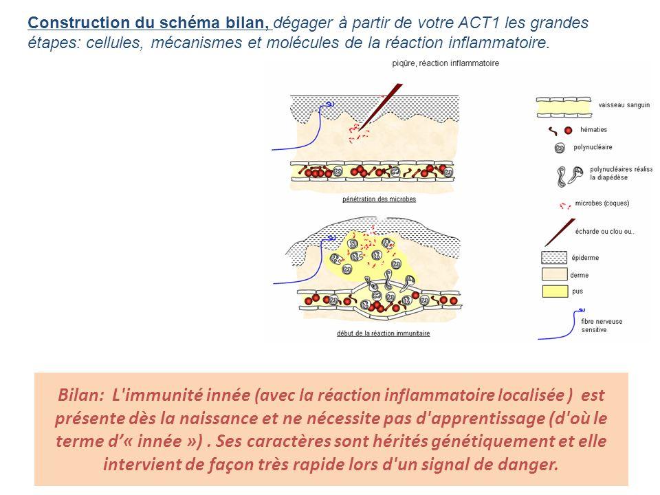 Construction du schéma bilan, dégager à partir de votre ACT1 les grandes étapes: cellules, mécanismes et molécules de la réaction inflammatoire. Bilan