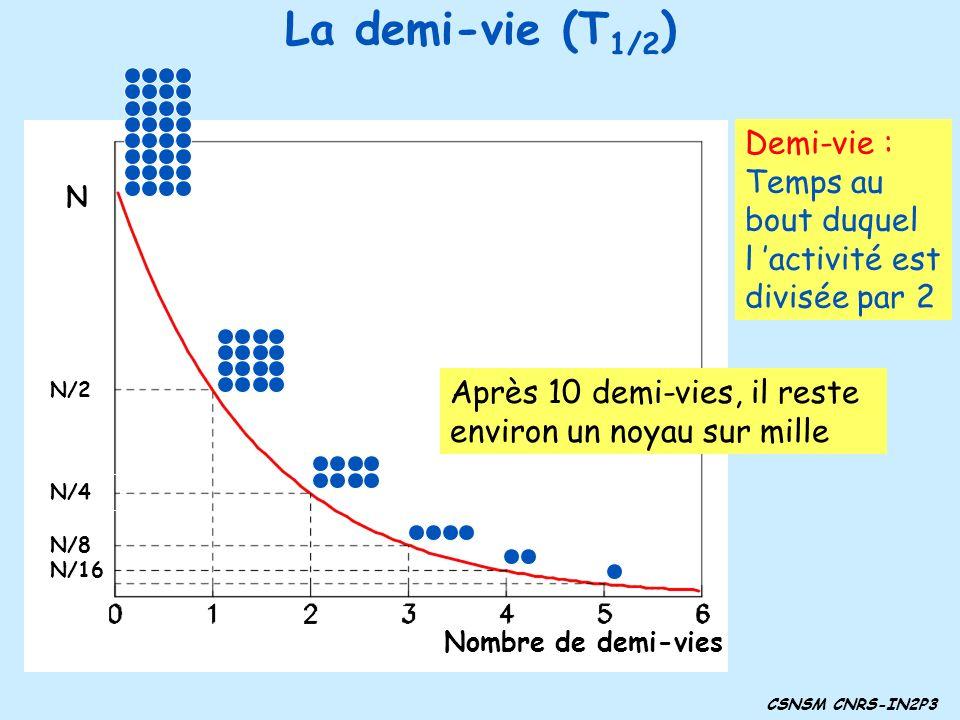 Nombre de demi-vies N N/2 N/4 N/8 N/16 Demi-vie : Temps au bout duquel l activité est divisée par 2 Après 10 demi-vies, il reste environ un noyau sur