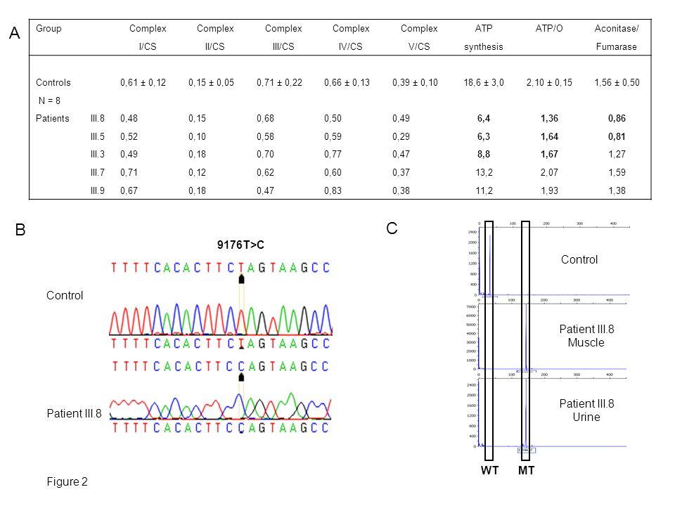 Control Patient III.8 B C Figure 2 A Group Complex ATPATP/OAconitase/ I/CSII/CSIII/CSIV/CSV/CSsynthesis Fumarase Controls 0,61 ± 0,120,15 ± 0,050,71 ±