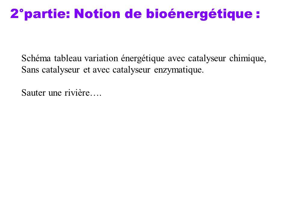 2°partie: Notion de bioénergétique : Schéma tableau variation énergétique avec catalyseur chimique, Sans catalyseur et avec catalyseur enzymatique. Sa