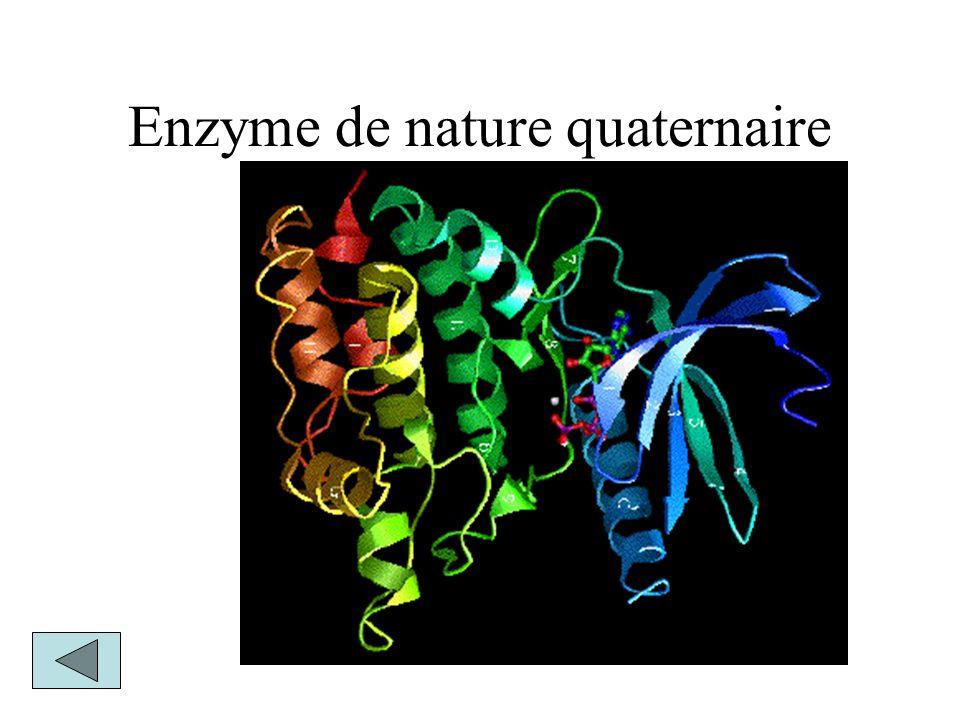 Enzyme de nature quaternaire