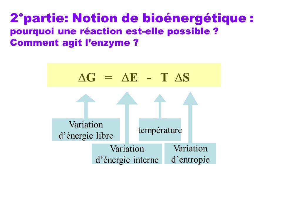 2°partie: Notion de bioénergétique : pourquoi une réaction est-elle possible ? Comment agit lenzyme ? G = E - T S Variation dénergie libre Variation d