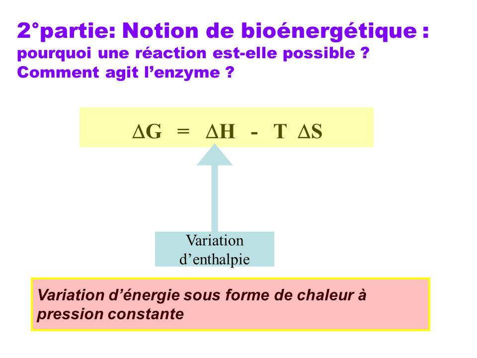 2°partie: Notion de bioénergétique : pourquoi une réaction est-elle possible ? Comment agit lenzyme ? G = H - T S Variation denthalpie Variation déner