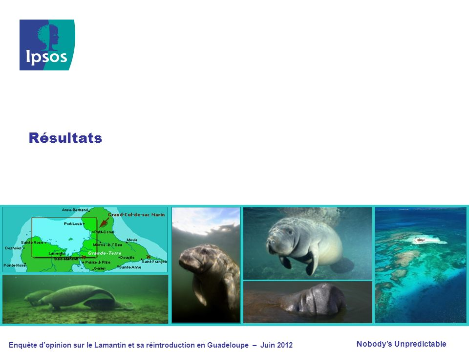 © 2012 Ipsos Enquête dopinion sur le Lamantin et sa réintroduction en Guadeloupe – Juin 2012 17 Notoriété du projet « Avez-vous déjà entendu parler d un projet de réintroduction du Lamantin dans les eaux de la Guadeloupe .