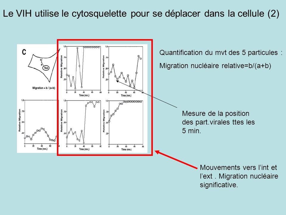 Quantification du mvt des 5 particules : Migration nucléaire relative=b/(a+b) Le VIH utilise le cytosquelette pour se déplacer dans la cellule (2) Mesure de la position des part.virales ttes les 5 min.