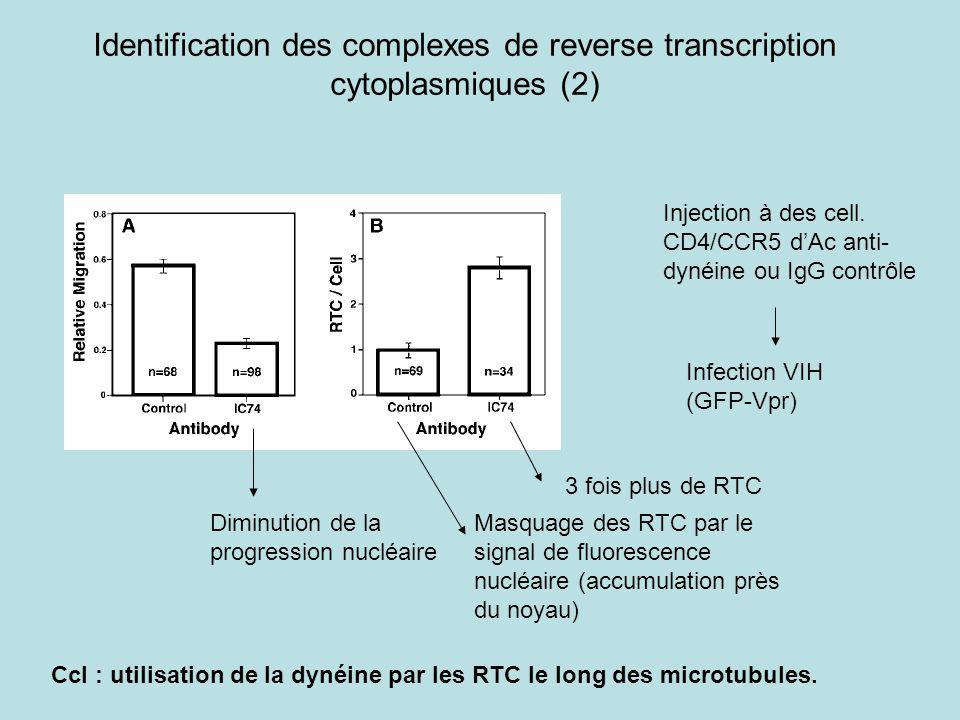 Identification des complexes de reverse transcription cytoplasmiques (2) Injection à des cell. CD4/CCR5 dAc anti- dynéine ou IgG contrôle Infection VI