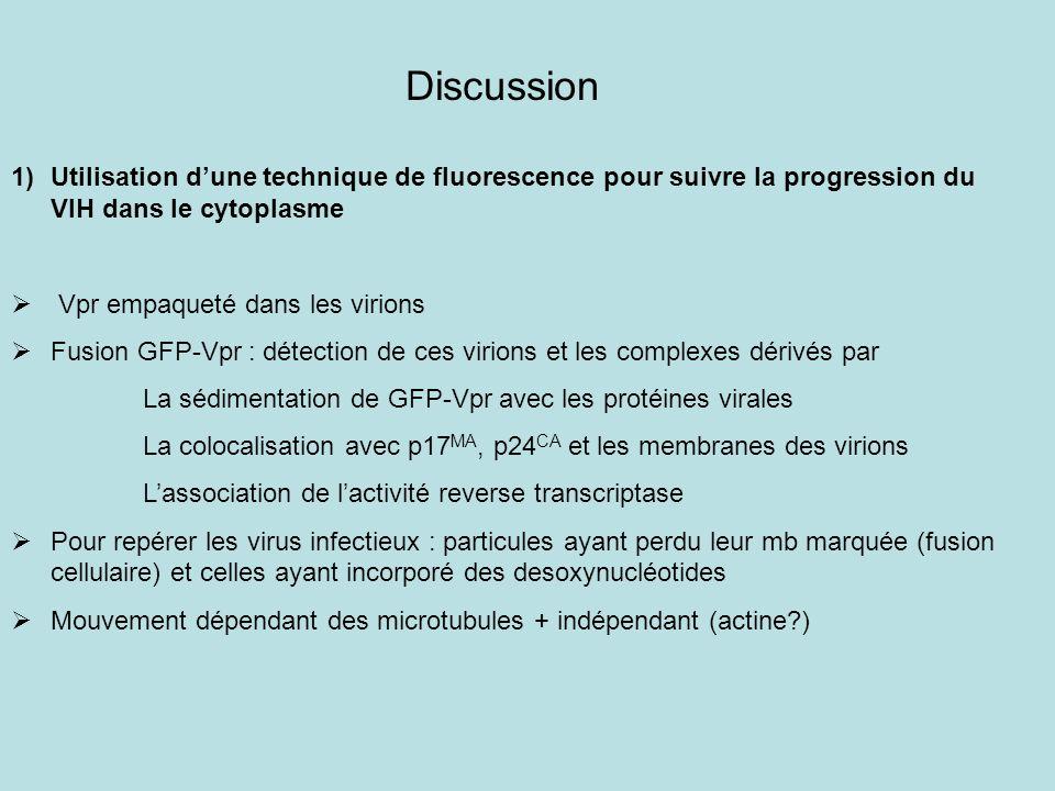 Discussion 1)Utilisation dune technique de fluorescence pour suivre la progression du VIH dans le cytoplasme Vpr empaqueté dans les virions Fusion GFP