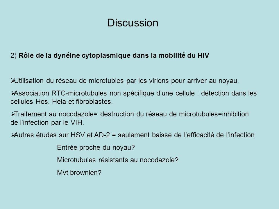 Discussion 2) Rôle de la dynéine cytoplasmique dans la mobilité du HIV Utilisation du réseau de microtubles par les virions pour arriver au noyau. Ass