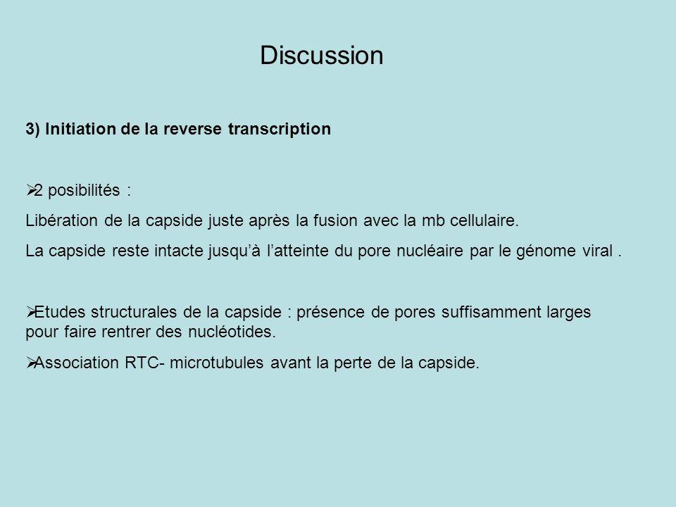 Discussion 3) Initiation de la reverse transcription 2 posibilités : Libération de la capside juste après la fusion avec la mb cellulaire. La capside