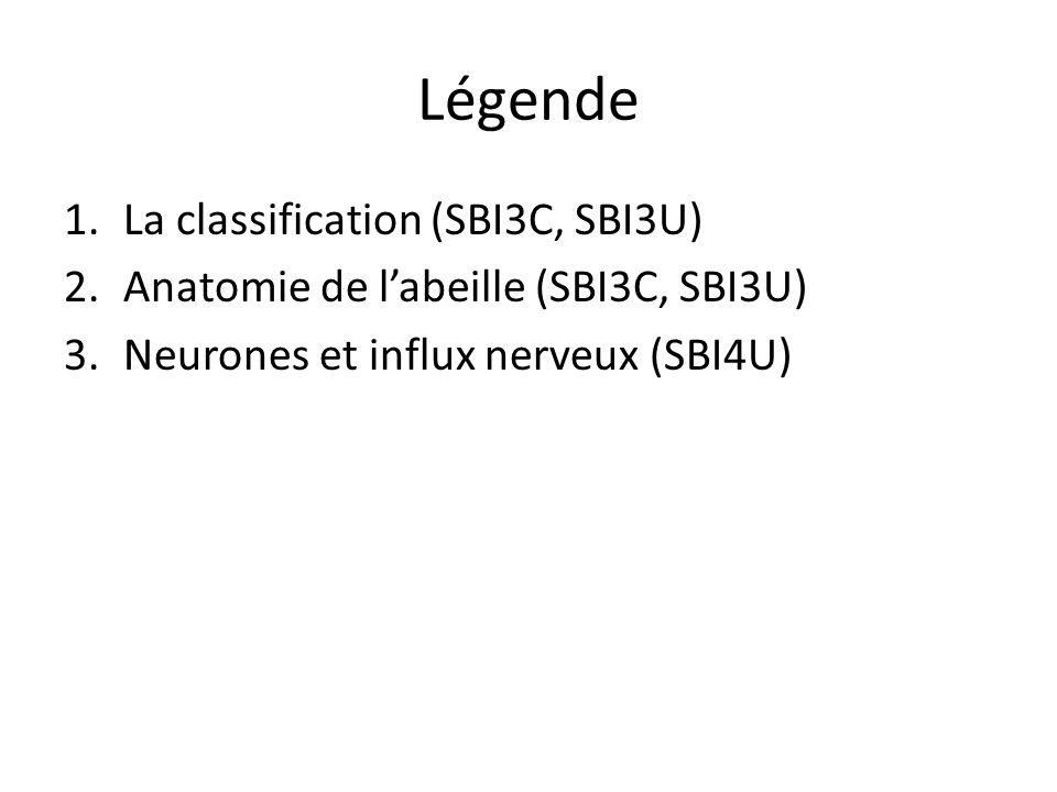 Légende 1.La classification (SBI3C, SBI3U) 2.Anatomie de labeille (SBI3C, SBI3U) 3.Neurones et influx nerveux (SBI4U)