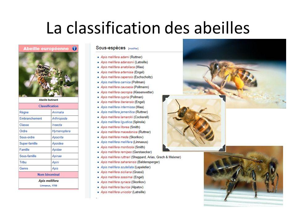 Explication de la classification RECOFAGE Règne: animal Embranchement: Arthropode (du grec arthron « articulation » et podos « pied », aussi appelés « articulés ».