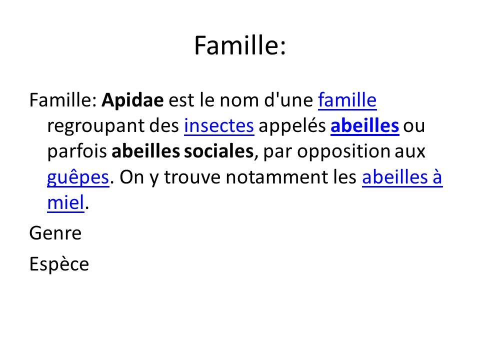 Famille: Famille: Apidae est le nom d une famille regroupant des insectes appelés abeilles ou parfois abeilles sociales, par opposition aux guêpes.