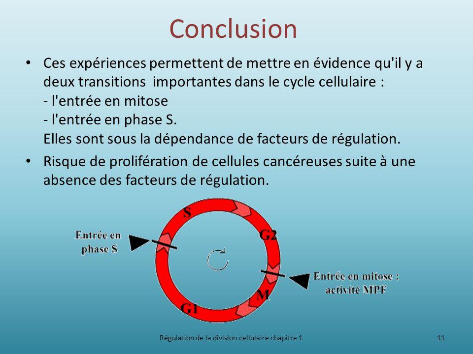Conclusion Ces expériences permettent de mettre en évidence qu'il y a deux transitions importantes dans le cycle cellulaire : - l'entrée en mitose - l