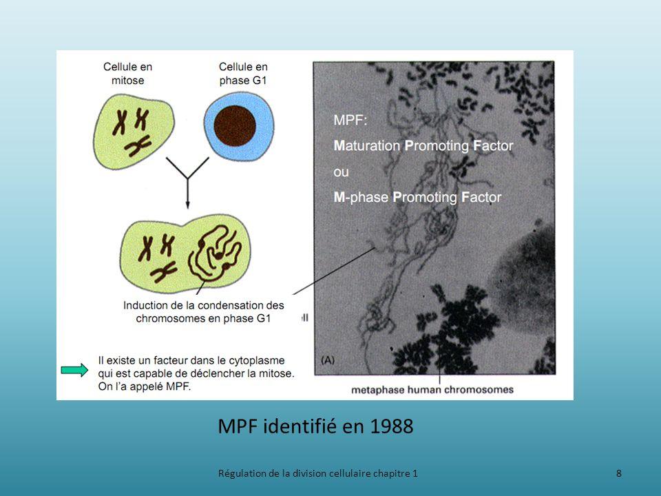 Régulation de la division cellulaire chapitre 18 MPF identifié en 1988