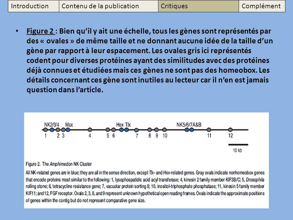 Figure 2 : Bien quil y ait une échelle, tous les gènes sont représentés par des « ovales » de même taille et ne donnant aucune idée de la taille dun gène par rapport à leur espacement.