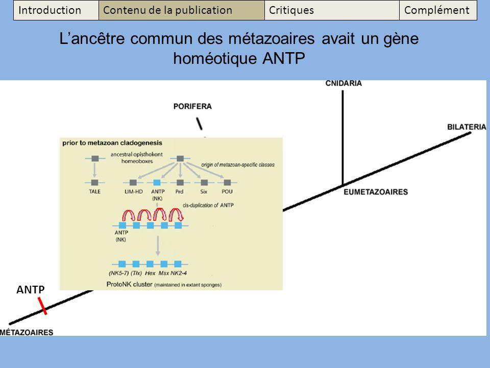 Lancêtre commun des métazoaires avait un gène homéotique ANTP ANTP IntroductionContenu de la publicationCritiquesComplément